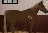 Lösung Traum Pferd
