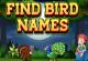 Vogelnamen Englisch